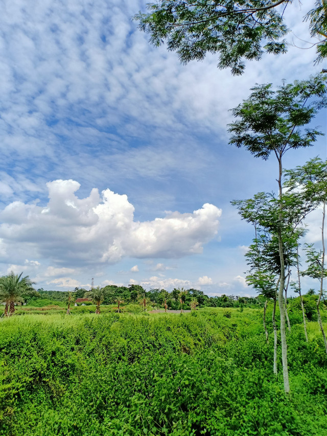 #freetoedit #myclick📷 #landscape#sky #clouds#tree#grass#green @picsart@freetoedit  What a beautiful creation of God😍
