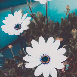 flowers floral nature iphone photography