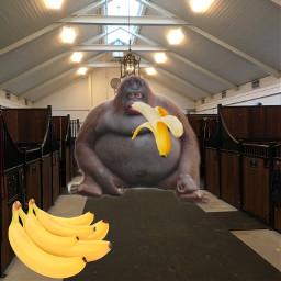 freetoedit uhohstinky banana gangbanan