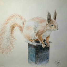 squirrel sketch gift drawing mydrawing