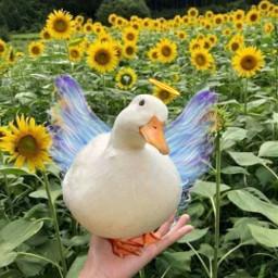 freetoedit srcangelwings angelwings