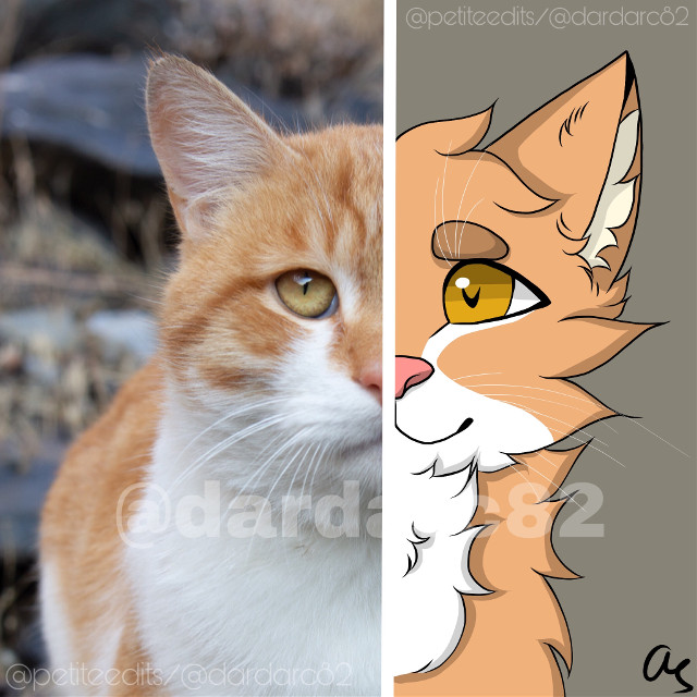 Entry for a contest, I submitted it on my other acc @petiteedits Link: https://picsart.com/i/318792674285201?challenge_id=5e3d69948aa7ca5a183affb6   #art #cat #catart #digitalart #handrawn #halfhalf #freetoedit