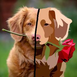 doggo rose animal pet freetoedit ectoonifyyourpet toonifyyourpet toonimal #toonpet