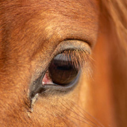 freetoedit photography petsandanimals horse beauty pceyes