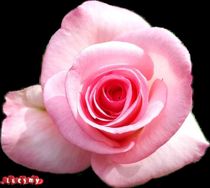 #lucymy #rosalucymy
