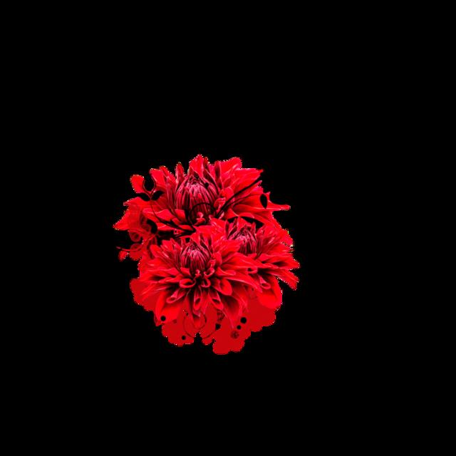 #freetoedit #flores #floral