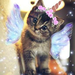 caticorn unicorn cat kitty cuddles freetoedit srcangelwings angelwings