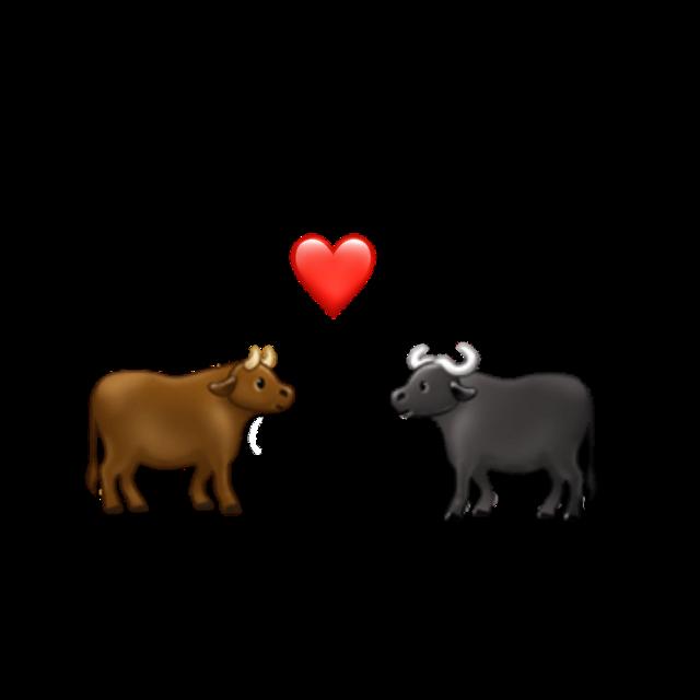 #love #animals #emojis😛