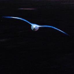 flying bird seagull animal nature