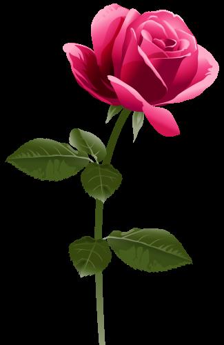 #tumblr #sticker #stickers #trend #flower #flowers #rose #roses #redrose #redflower #pinkflower  #pinkrose #plant #freetoedit