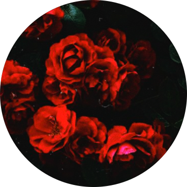 🌹 - - - - - - #red #redsticker #rose #redrose #aesthetic
