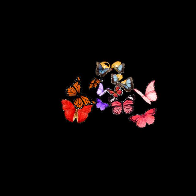 #buttterflycrown #butterfly