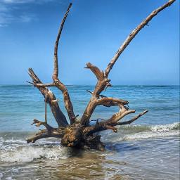 beachphotography sky blue tree