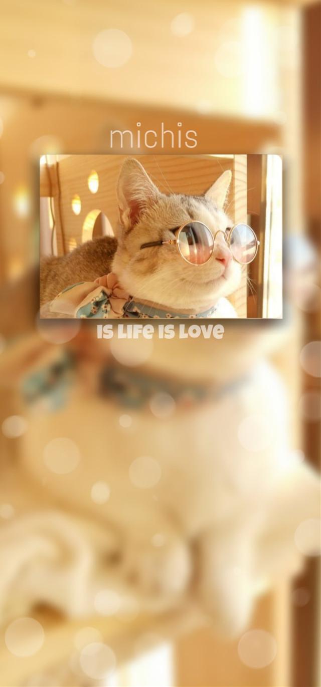 #fondodepantalla #gatito #lentes #amarillo #naranjo #luz #editedbyme