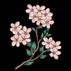 cherryblossom cherryblossoms pink peach branch freetoedit