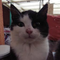 cat catlove cute cutepets meow freetoedit
