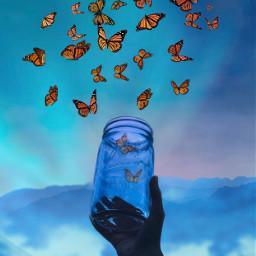 freetoedit butterfly butterflies leeresglas polarlights ircemptyjar emptyjar