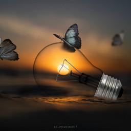 freetoedit sunset bulb butterfly picsart myedit madewithpicsart simple