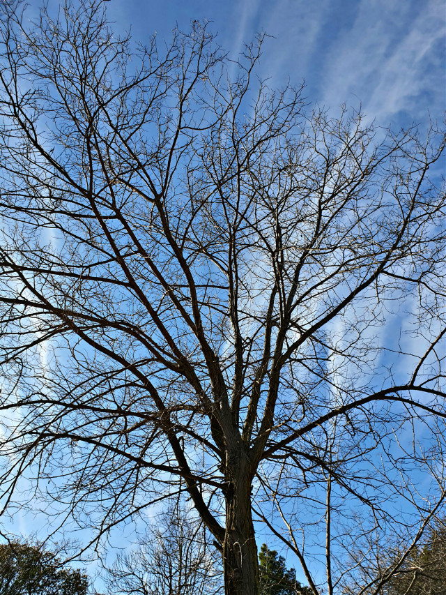 #myphoto #tree #treeoflife #wintertime  #freetoedit