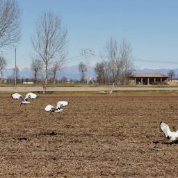 birds landscape fly ibis