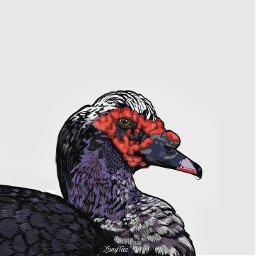 muscovy duck red drawnbyme drawing freetoedit