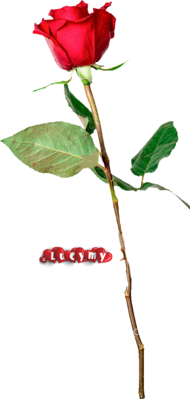 #NOremix #lucymy #red #rosalucymy #petalo #black