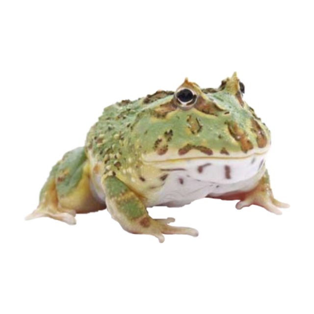 #freetoedit pacman frog png 🌿🪐 #frogs #frog #png #aesthetic #goblincore