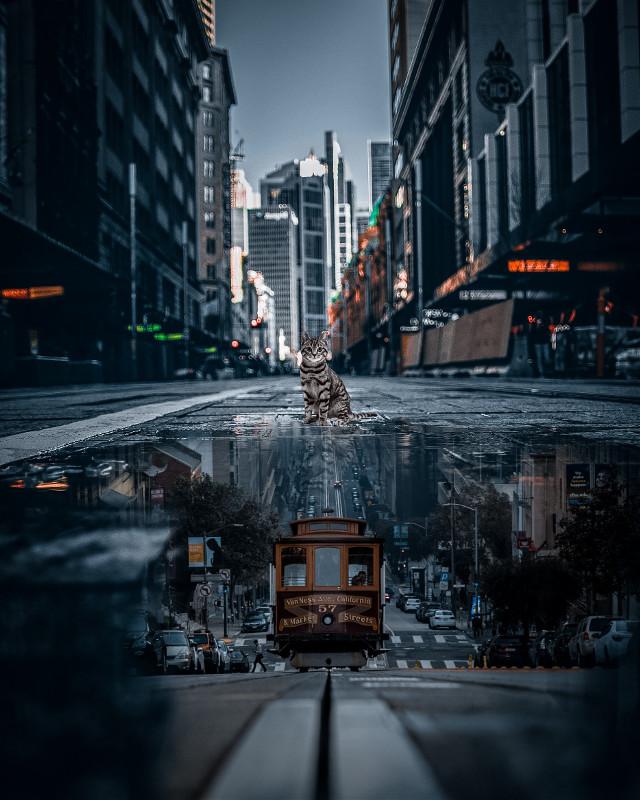 #city #street #cat