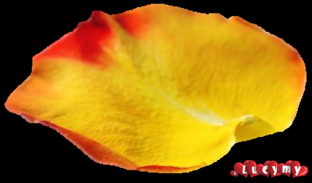 #NOremix #lucymy #petalo  #petali #yellow #petaloLucymy #rosalucymy