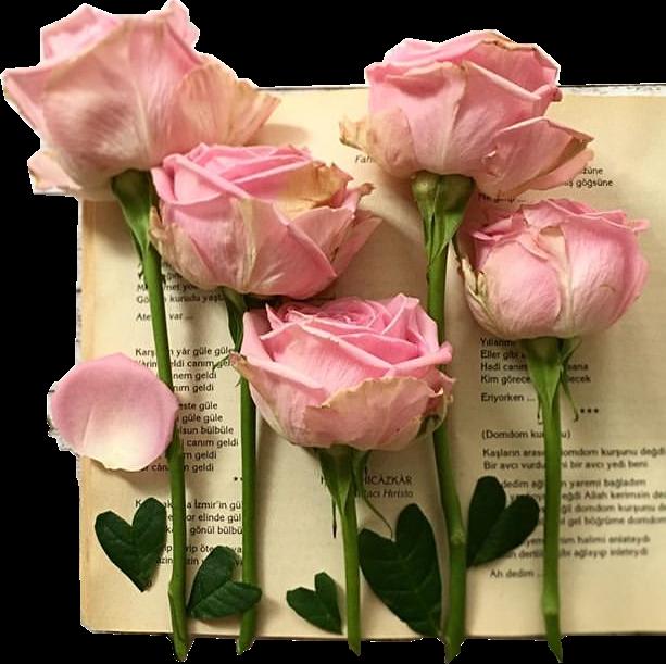 #roses#book #freetoedit