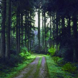 freetoedit forest wood
