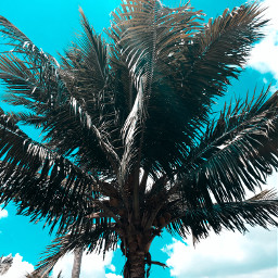 freetoedit tree sky nature