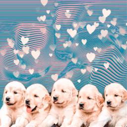 freetoedit valentine dogs hearts cute