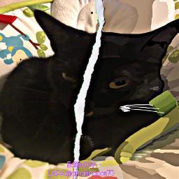 toon picsartchallenge pet blackie cat ectoonifyyourpet freetoedit
