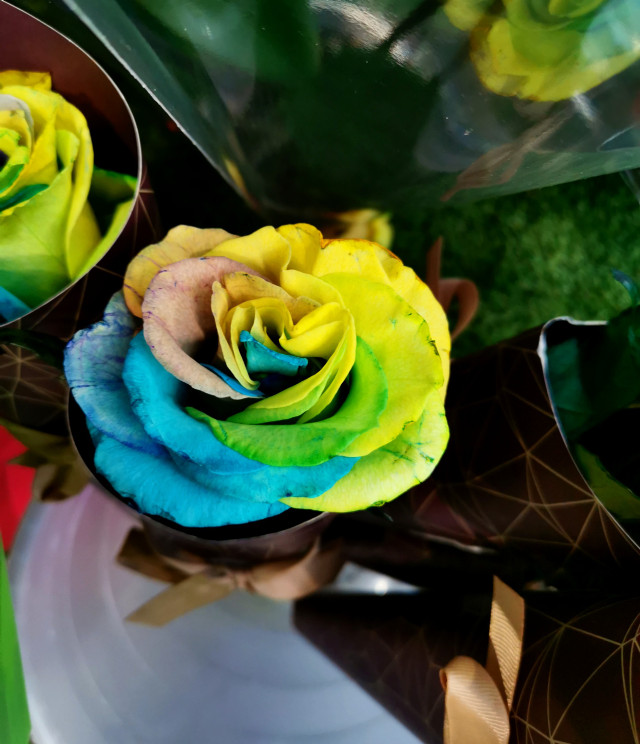 Looks like a Picsartist's has coloured in this rose  #freetoedit #colourful #rainbow #rose