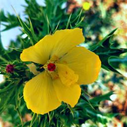 freetoedit nature flowerphotography naturalbeauty