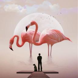 freetoedit giantanimals flamingos moon magical