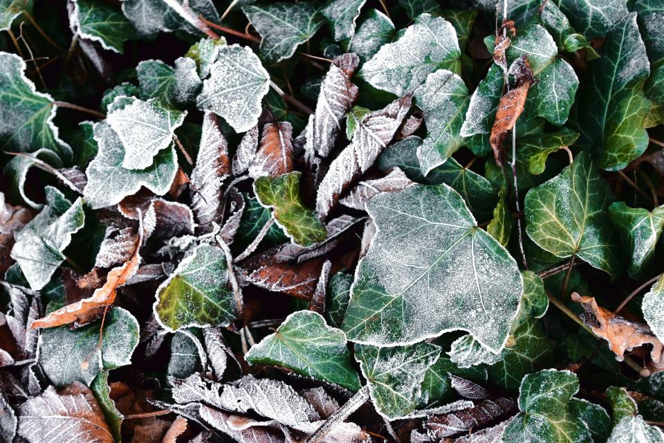 #freetoedit #leaves