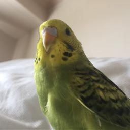 love bird petsandanimals cute buddy pctheonesyoulove theonesyoulove