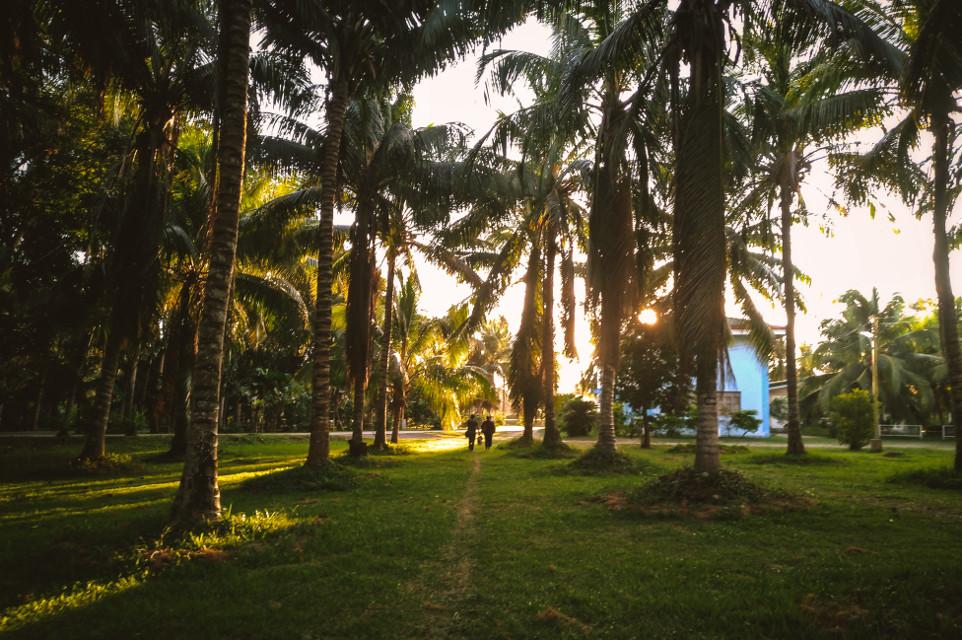 Morning in the tropics #freetoedit #philippines #mobilephotography #zenfone5 #zenfone #sunrise