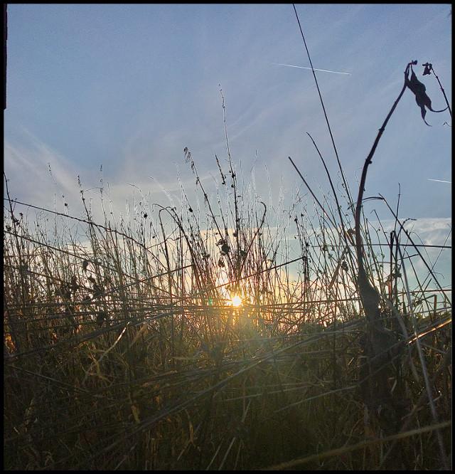 New beginning :) #notfreetoedit #germany #bavaria #deutschland #field #plants #flower #flowerphotography #grass #grassland #grassfield #sun #sunset #sunrise #sunshine #sunsetphotography #sunnyday #sky #bluesky #clouds