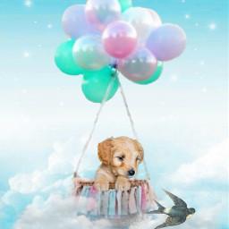 puppy labradorretriever swallow sky balloon freetoedit