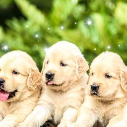 freetoedit puppies