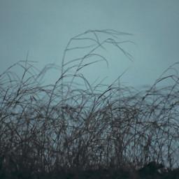 freetoedit photography naturephotography grass naturelovers