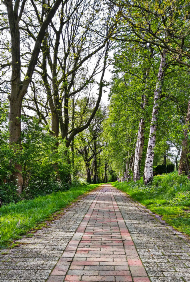 Beautiful Country Road - #freetoedit #road #trees #forest #inspire #woods #nature #outdoors #naturelover #edit #myedit #adventure #happy #happiness #hike #naturesbeauty