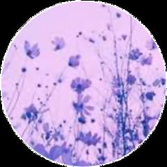 purple aesthetic flower pretty cute freetoedit