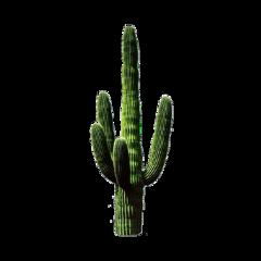 cactus aesthetic retro vintage retroaesthetic freetoedit