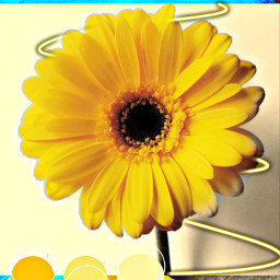 freetoedit flawer yellow_flower colurful