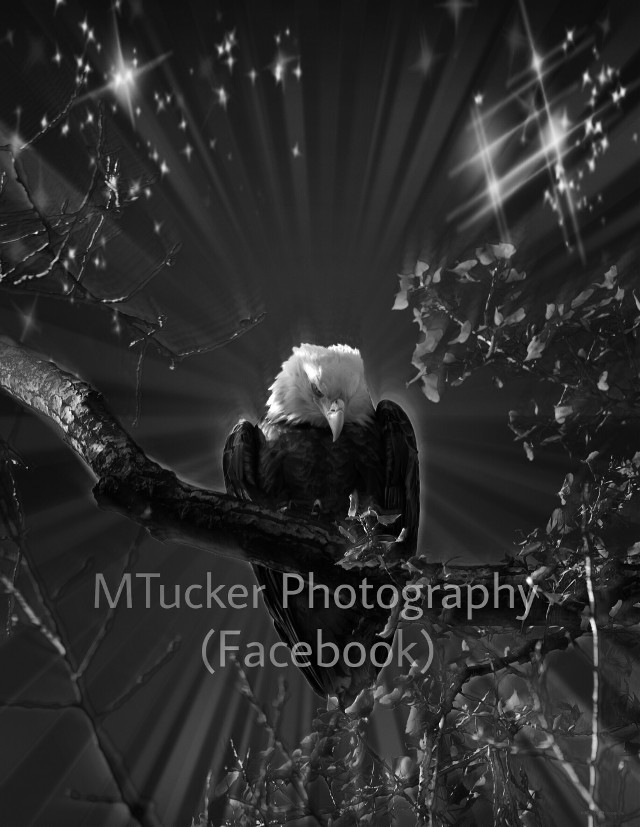 I need a new tablet, this one is on it's last breath. It takes 10 minutes or more to post and half the photos are a blank image. Until then... #eagle #blackandwhite