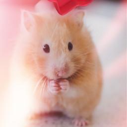 freetoedit hamster heartbubble cute srclikebubble likebubble